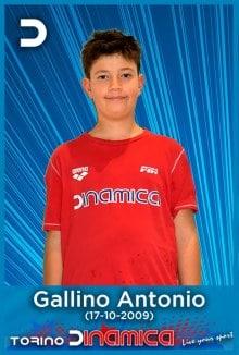 Gallino-Antonio